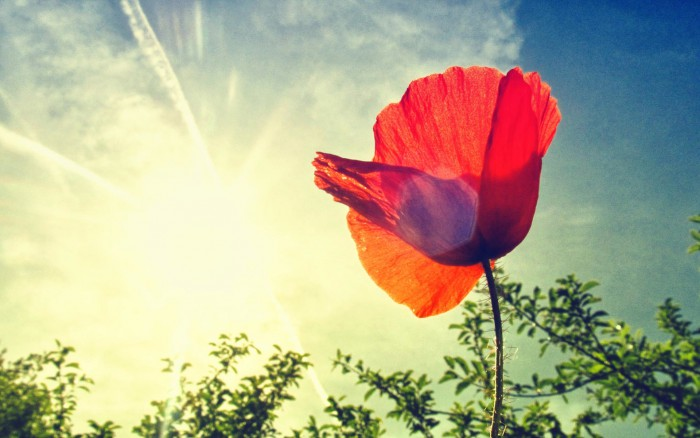 The most beautiful word in the french language mind your monde poppy flower 2 use mightylinksfo